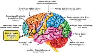 Broca Brain Map